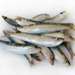 La sarda di lago: come conservare e utilizzare questo ingrediente della tradizione gardesana