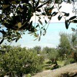 Olio del Garda, l'oro verde del Garda Trentino